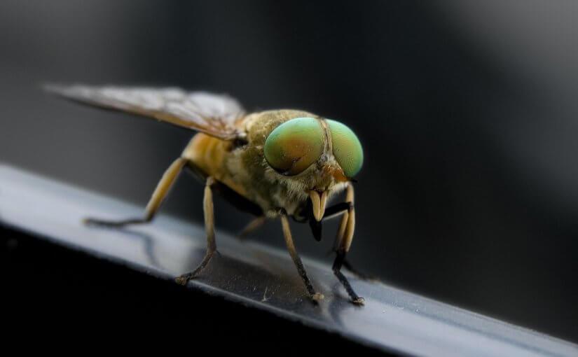 Vervelende insecten